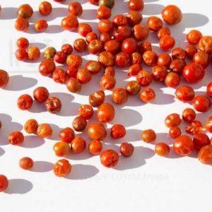Чилтепин / Chiltepin Pepper