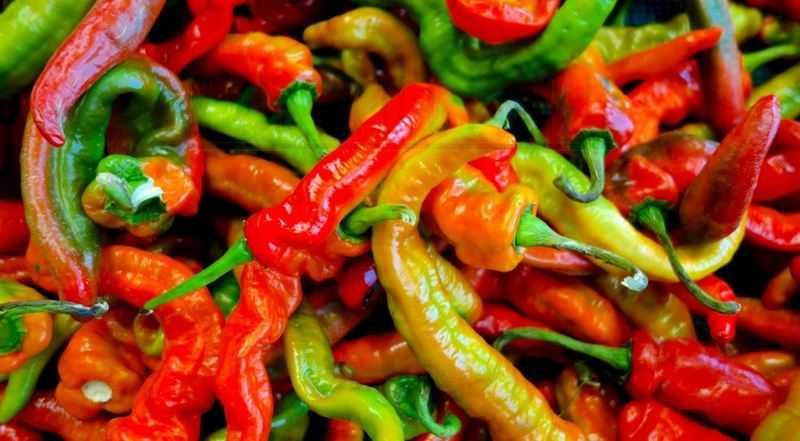 Италиан Лонг Хот перец   Italian Long Hot Pepper