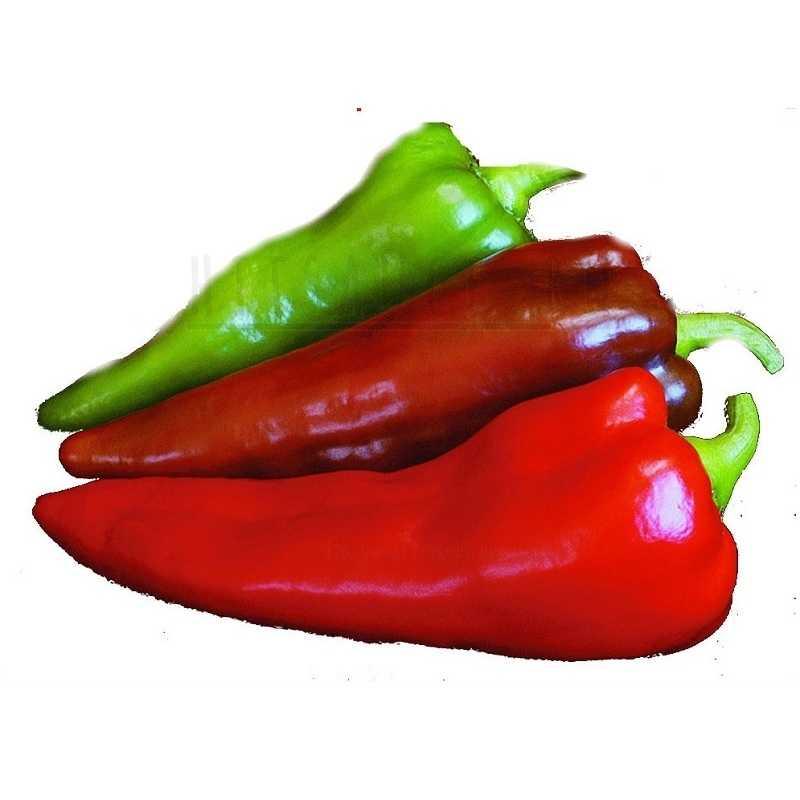 Кармен перец Carmen pepper