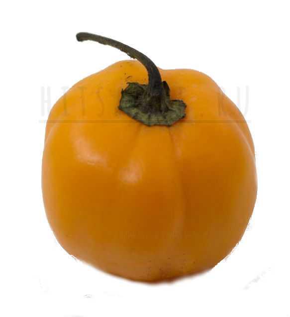 Манзано перец / Manzano Pepper