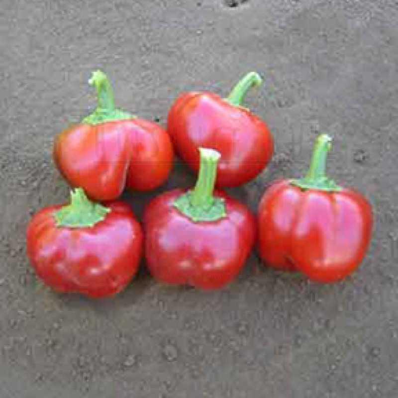 Перец Мексибэль / Mexibell pepper