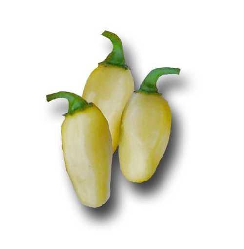 Перуанский белый хабанеро перец