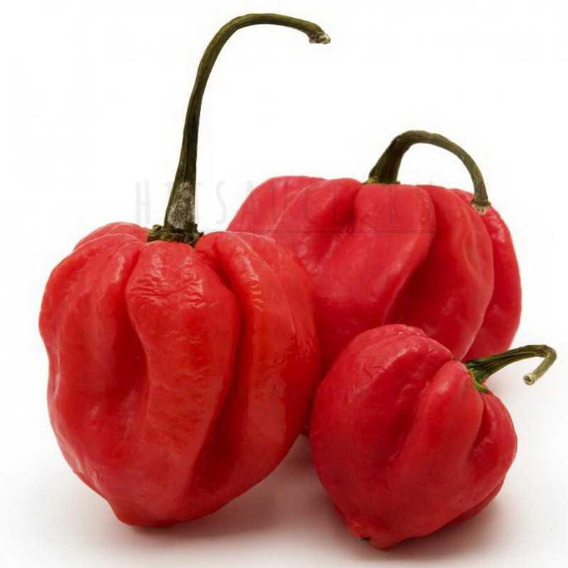 Пименто перец pimento_ pepper