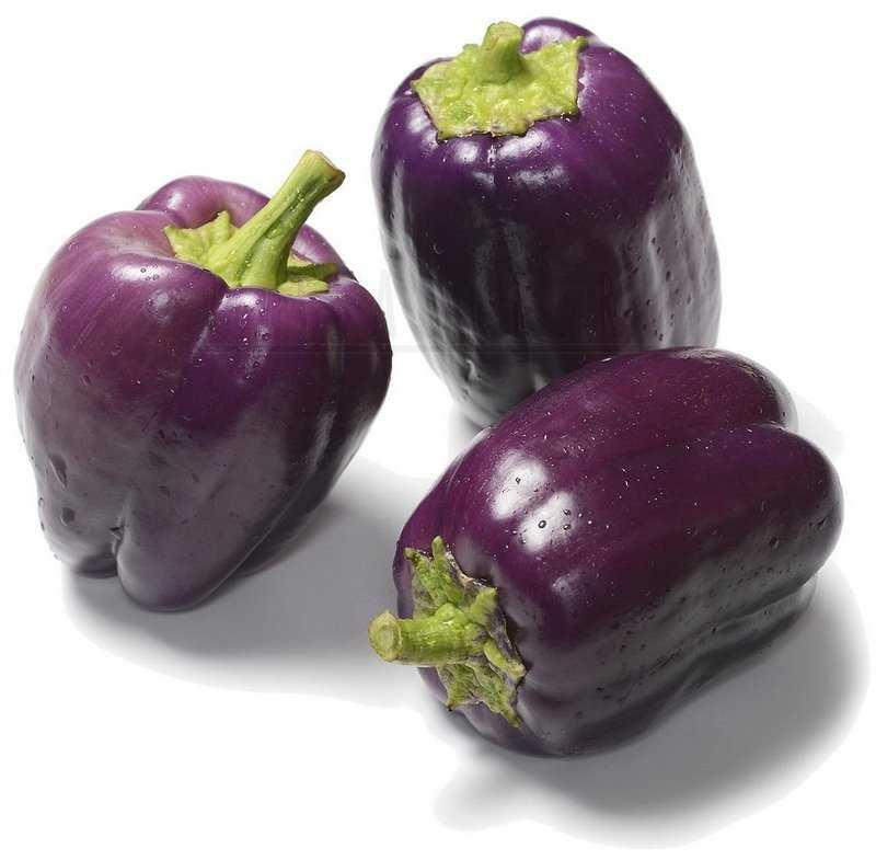 Фиолетовый красавец Purple Beauty Pepper