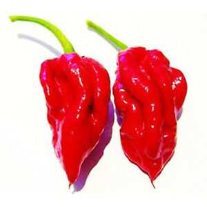 Devil's breath Pepper Перец дыхание дьявола
